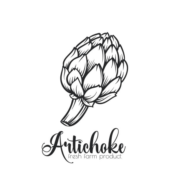Hand drawn artichoke icon. Hand drawn artichoke icon. Vector badge vegetable in the old ink style for brochures, banner, restaurant menu and market artichoke stock illustrations