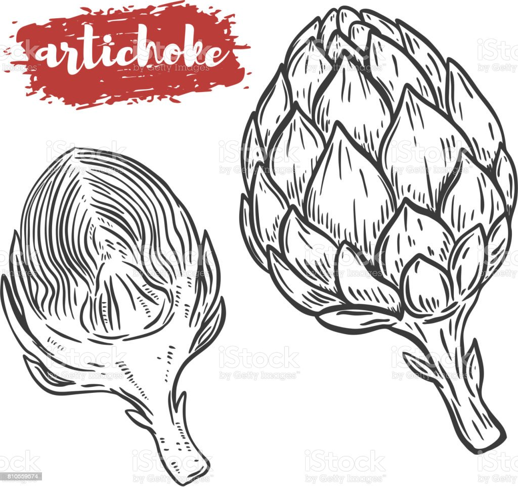 Hand drawn artichoke illustration isolated on white background. Design element for poster, menu. Vector illustration vector art illustration
