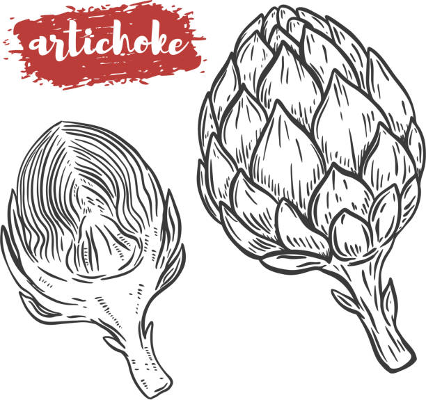 Hand drawn artichoke illustration isolated on white background. Design element for poster, menu. Vector illustration Hand drawn artichoke illustration isolated on white background. Design element for poster, menu. Vector illustration artichoke stock illustrations