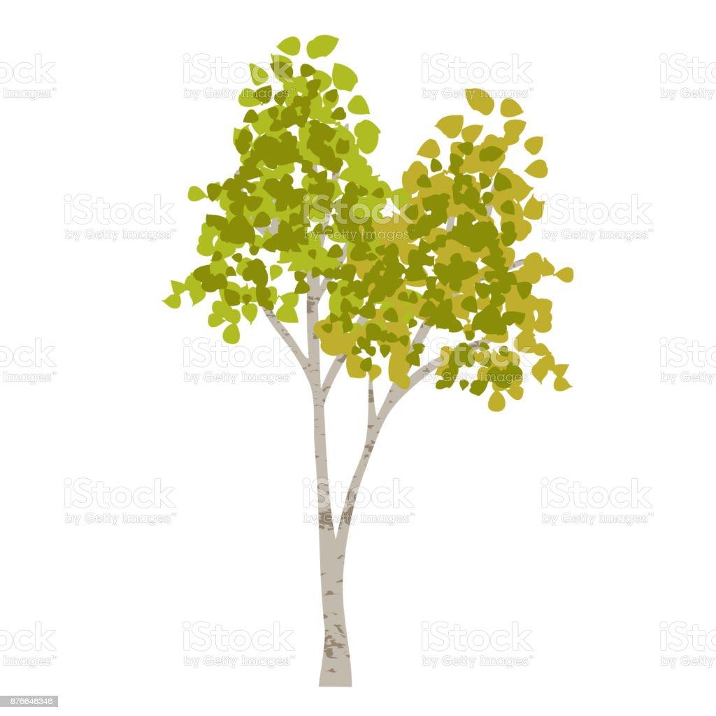 hand drawn aspen birch tree vector art illustration