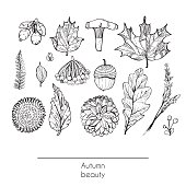 Hand drawn autumn beautiful set of leaves, flowers, branches