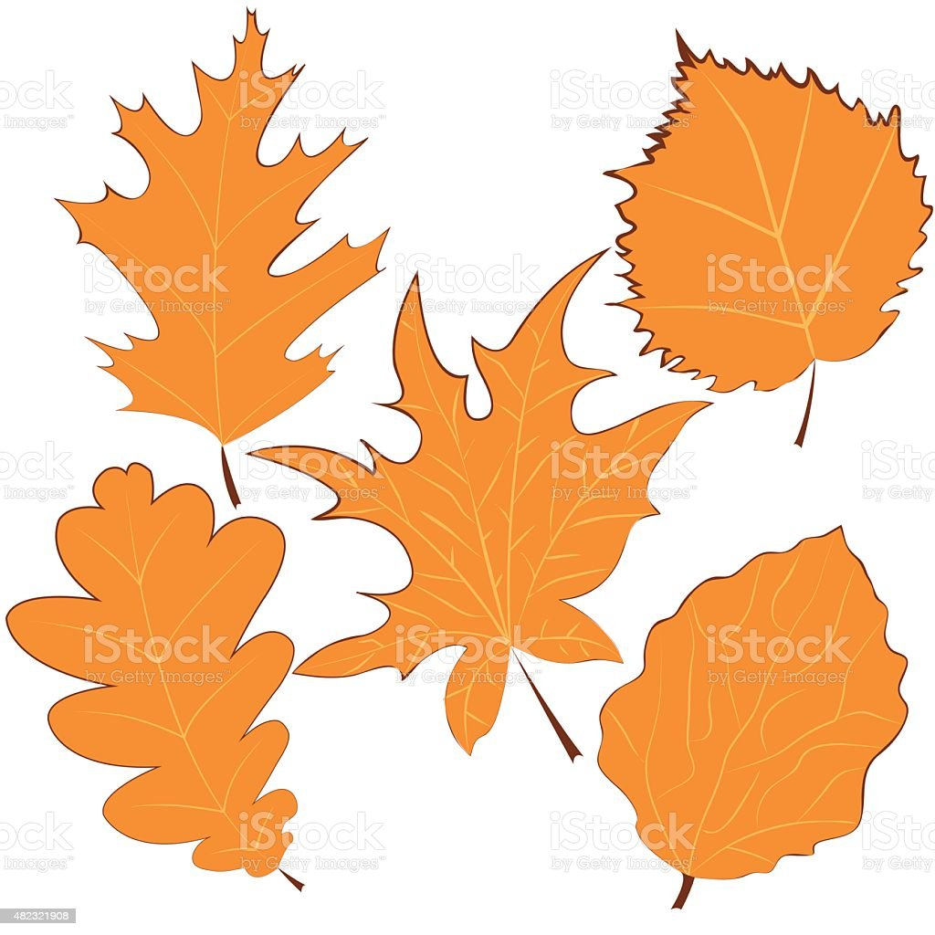 Hand drawn autumn leaves. Vector illustration vector art illustration