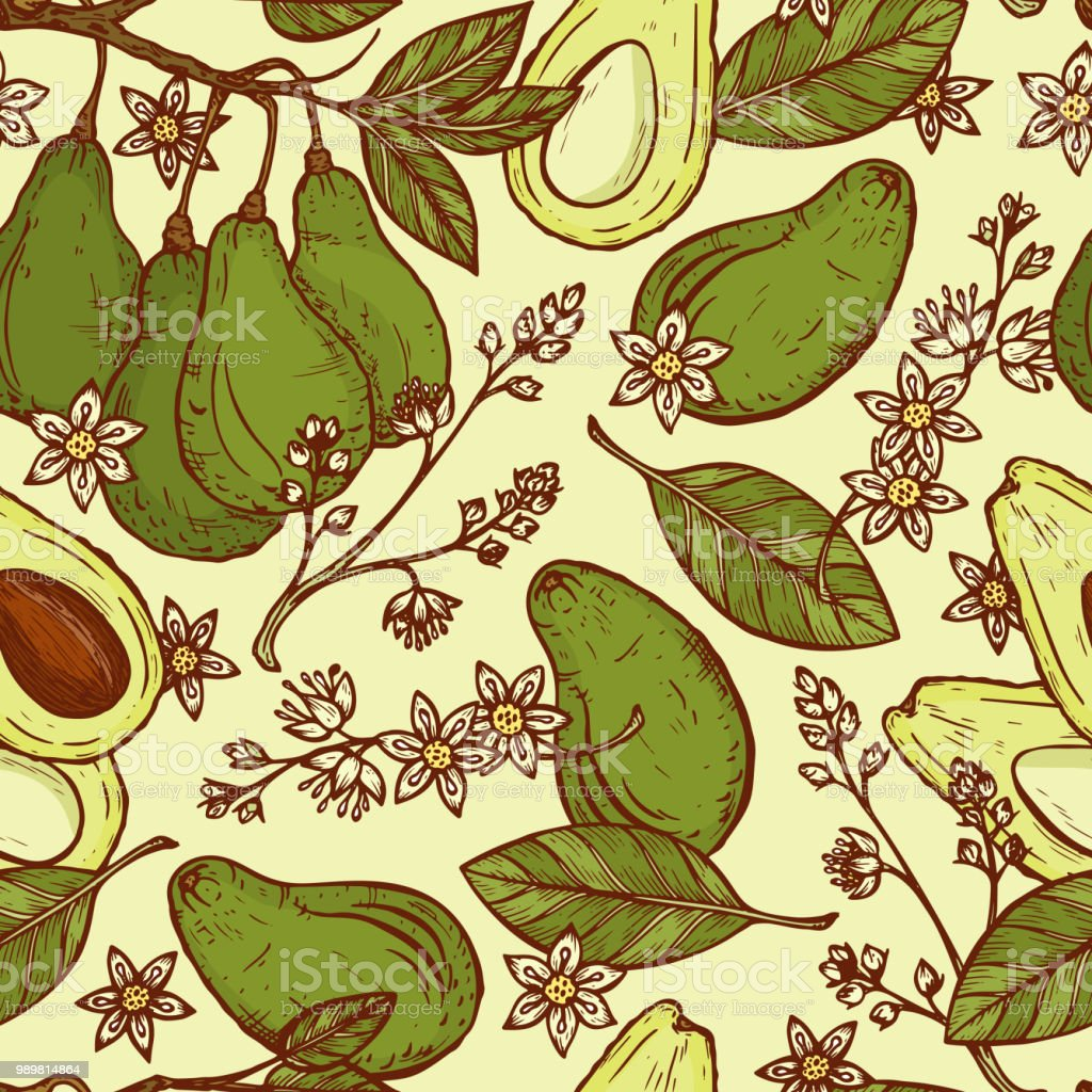 Hand drawn Avocados Vector Seamless pattern. Branches with leaves and fruit. Blossoming Avocado. Leaves, Flowers, Tropical Fruits. Floral background vector art illustration
