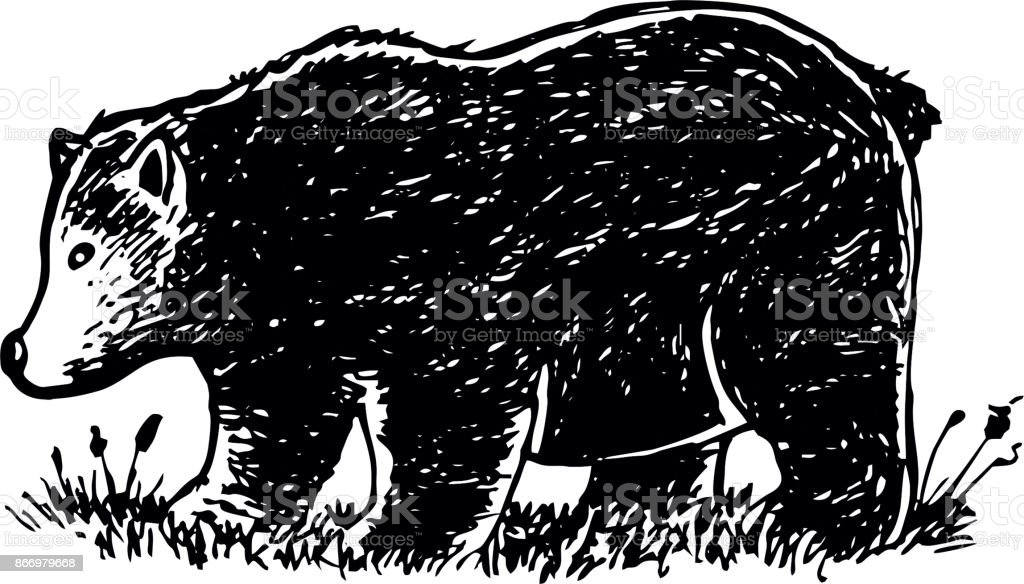 hand drawn baby bear vector art illustration