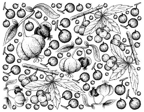 Hand Drawn Background of Allophylus Edulis and Pitanga Fruits