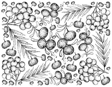 Hand Drawn Background of Black Goji and Rowanberries