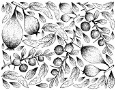 Hand Drawn Background of Humbug Pears and Kei Apple