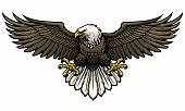 vector of hand drawn bald eagle spreading the wings
