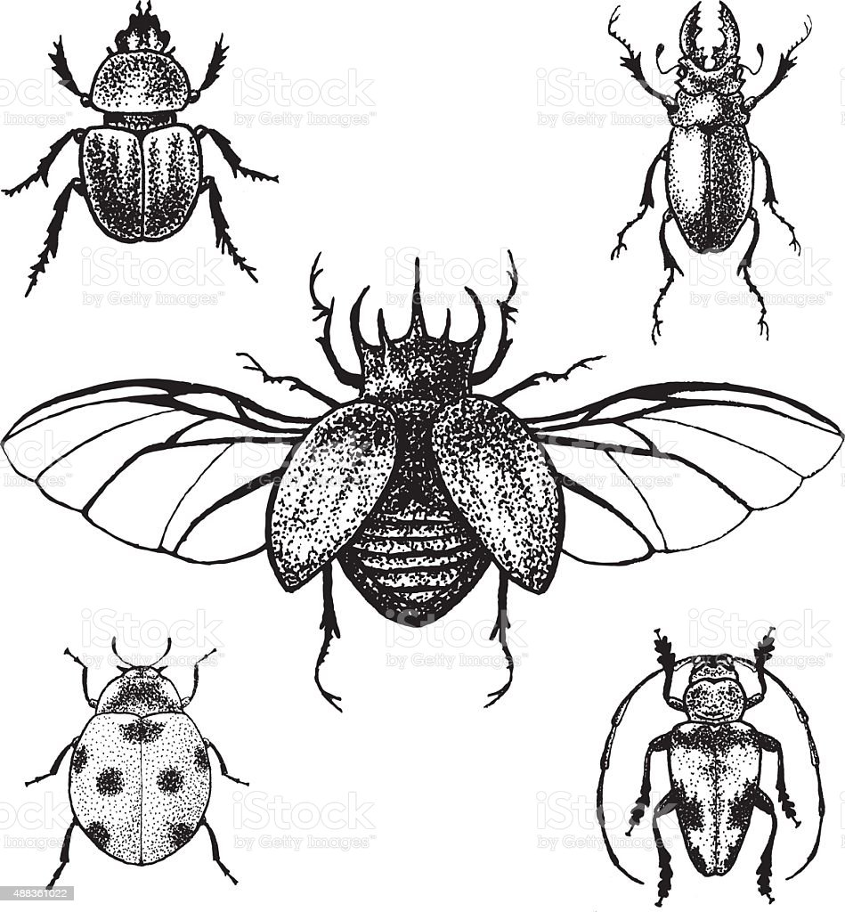Hand drawn beetles set vector art illustration
