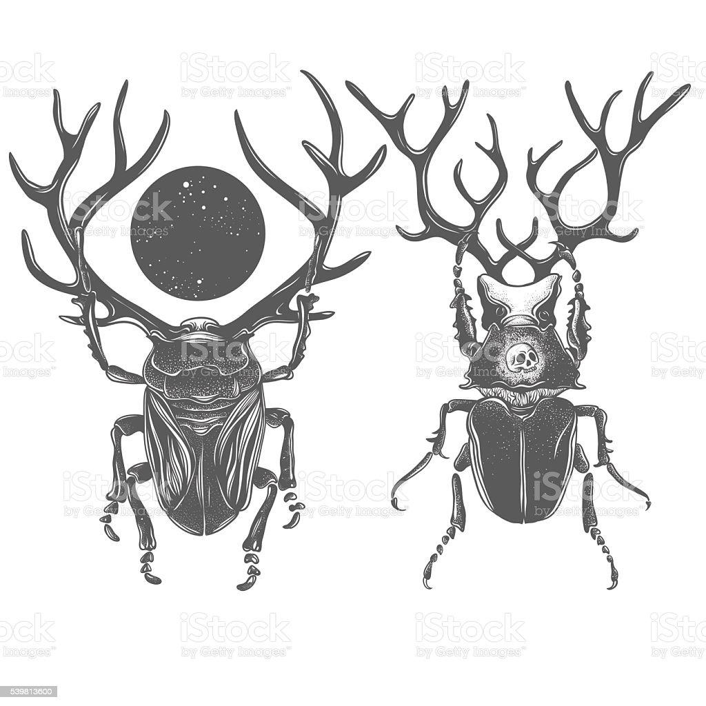 Hand drawn beetles vector art illustration