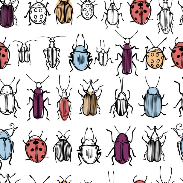 Hand drawn beetles . Vector pattern Hand drawn beetles on white background. Vector seamless pattern butterfly insect stock illustrations