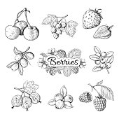 Hand drawn berries. Cherry blueberry strawberry blackberry vintage drawing, berry sketch drawing. Vector graphic templates illustration sweet wild nature organic food set