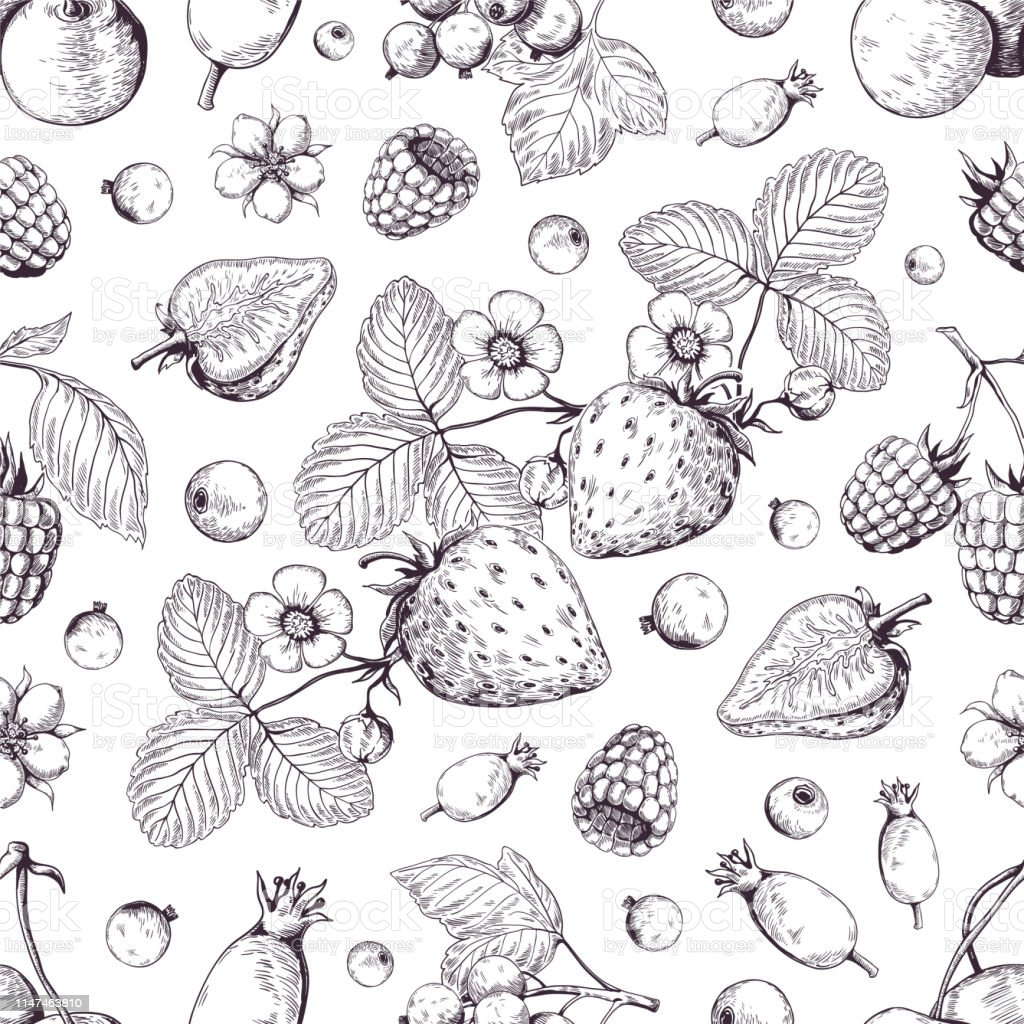 Hand drawn berries pattern. Vintage forest cherry strawberry blackberry cranberry sketch drawing. Vector dessert menu background - arte vettoriale royalty-free di Alimentazione sana