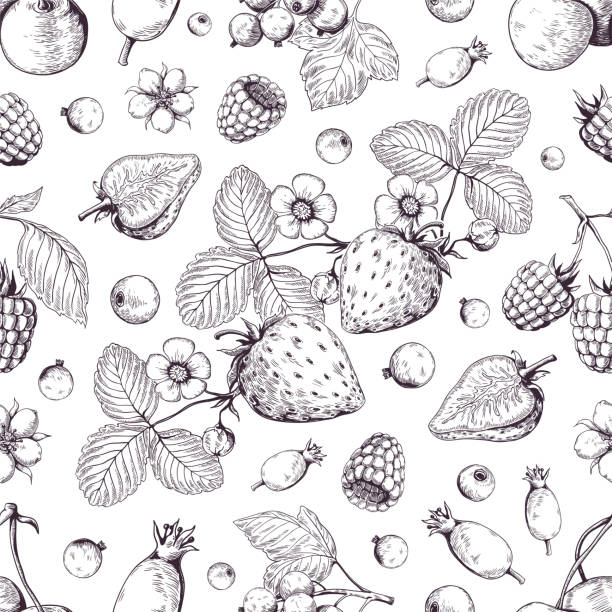 illustrazioni stock, clip art, cartoni animati e icone di tendenza di hand drawn berries pattern. vintage forest cherry strawberry blackberry cranberry sketch drawing. vector dessert menu background - fragole