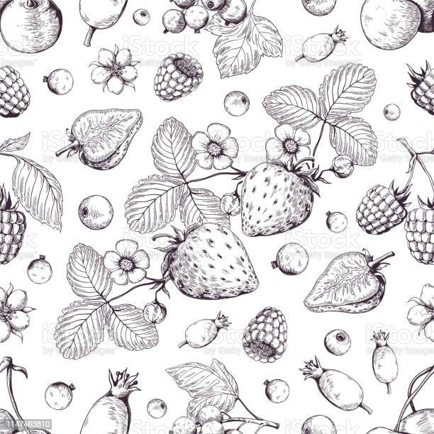 Hand Drawn Berries Pattern Vintage Forest Cherry Strawberry Blackberry Cranberry Sketch Drawing Vector Dessert Menu Background - Immagini vettoriali stock e altre immagini di Alimentazione sana