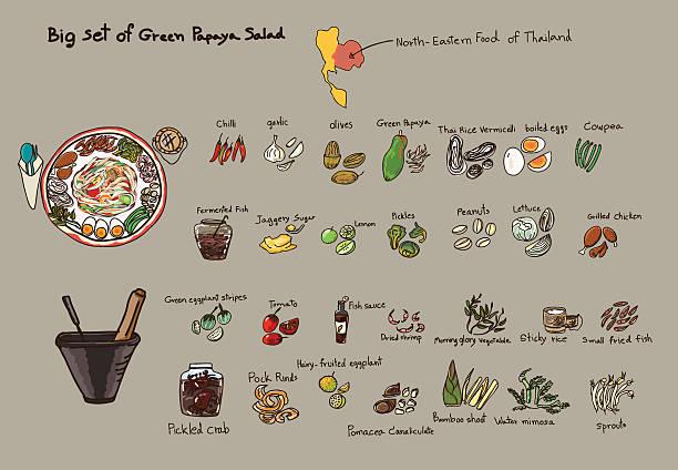 hand drawn big set grüner papaya-salat-vektorgrafik - vermicelli stock-grafiken, -clipart, -cartoons und -symbole