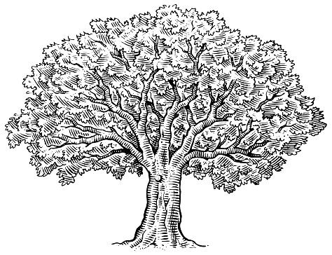 Hand drawn big tree illustration