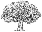 A large tree drawn in pen and ink.
