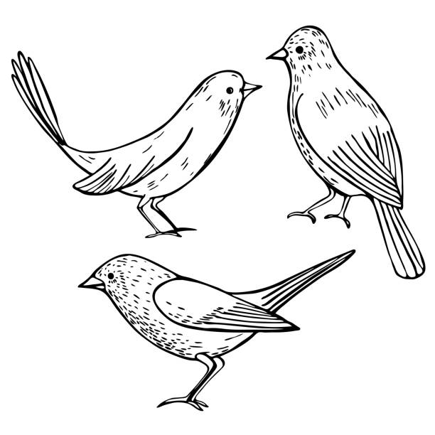 ilustrações, clipart, desenhos animados e ícones de pássaros desenhados à mão. ilustração do vetor. - conceitos e temas
