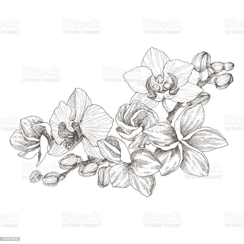Bouquet De Contour Noir Dessinés à La Main Avec Des