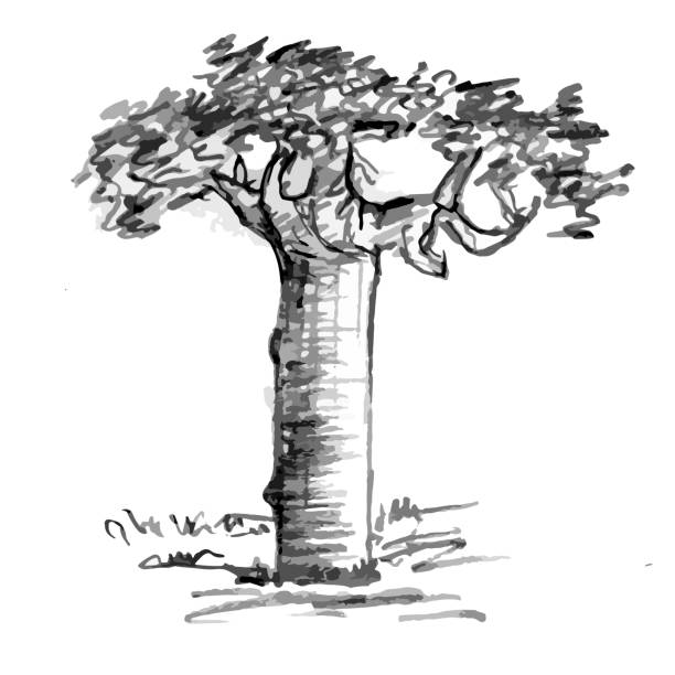 Mano dibujada negro árbol aislado sobre fondo blanco. Ramas de la pequeña planta en la ilustración de vector. Simple bosquejo gris. - ilustración de arte vectorial