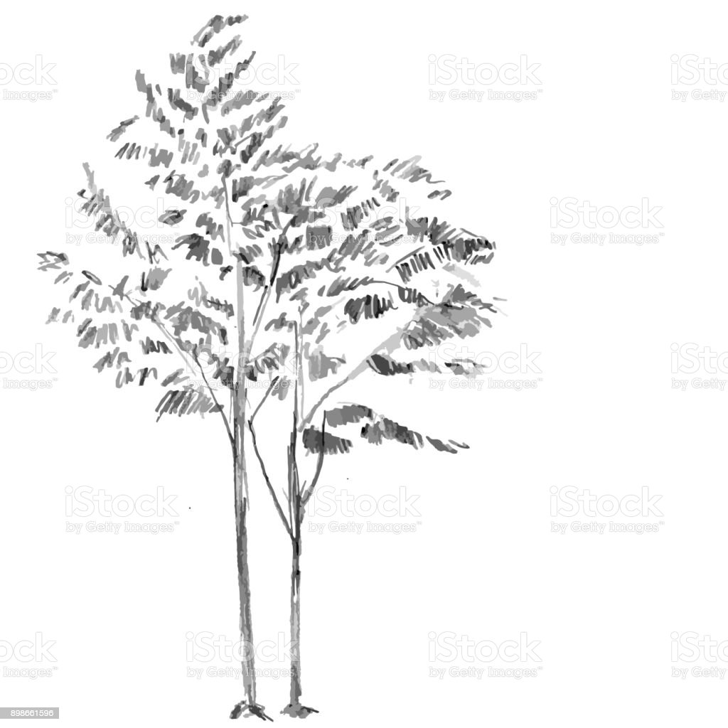 Hand Drawn Black Tree Isolated On White Background Branches Of Small Plant Vector Illustration
