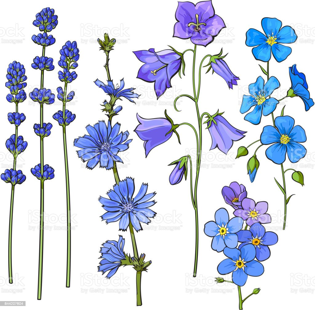 Hand drawn blue flowers - lavender, forget me not, bell, cornflowers vector art illustration
