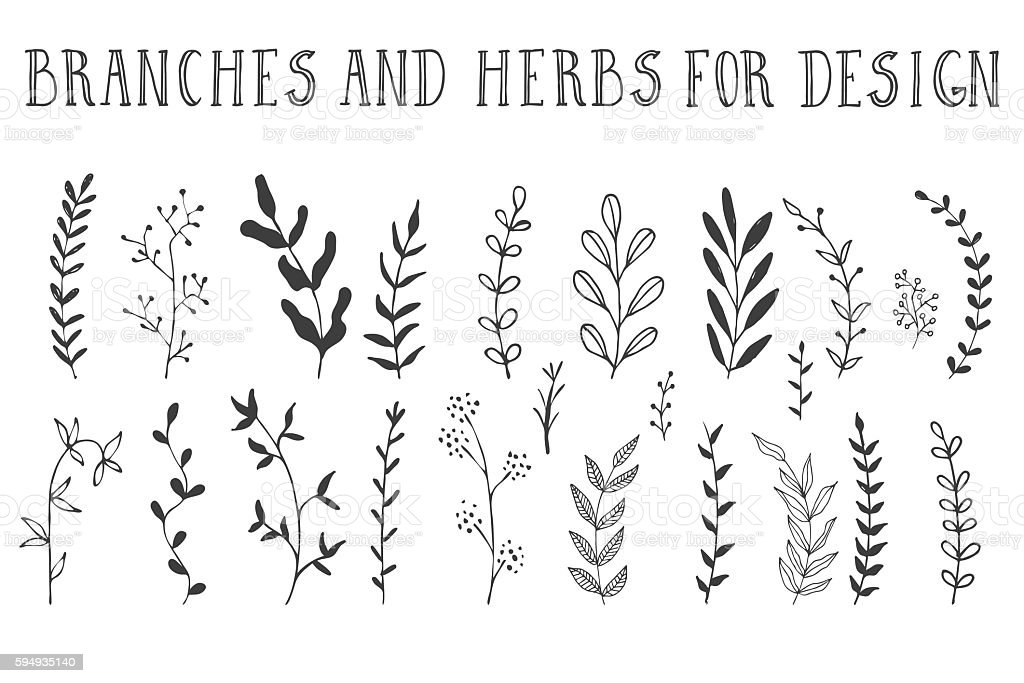 Hand drawn branches and herbs vector art illustration