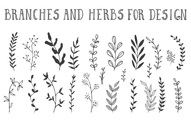 hand drawn branches and herbs - gałązka stock illustrations