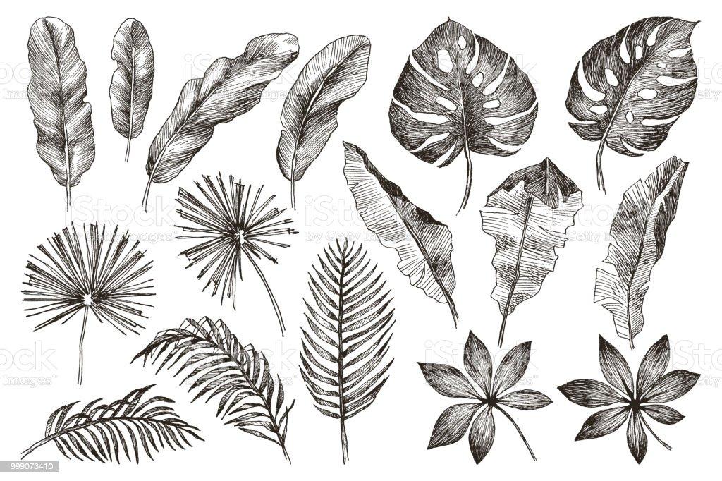 Ilustración de Dibujado A Mano Ramas Y Hojas De Plantas Tropicales ...