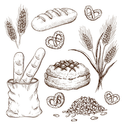 hand drawn breads set isolated on white. vector vintage illustration of variety bread like french baguette, round rustic bread, wheat loaf, rye or wheat ears, grains and pretzels engraved collection.