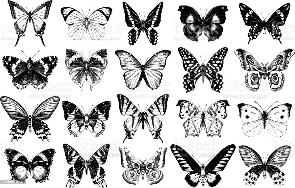 Handgezeichnete Schmetterlingssammlung – Vektorgrafik