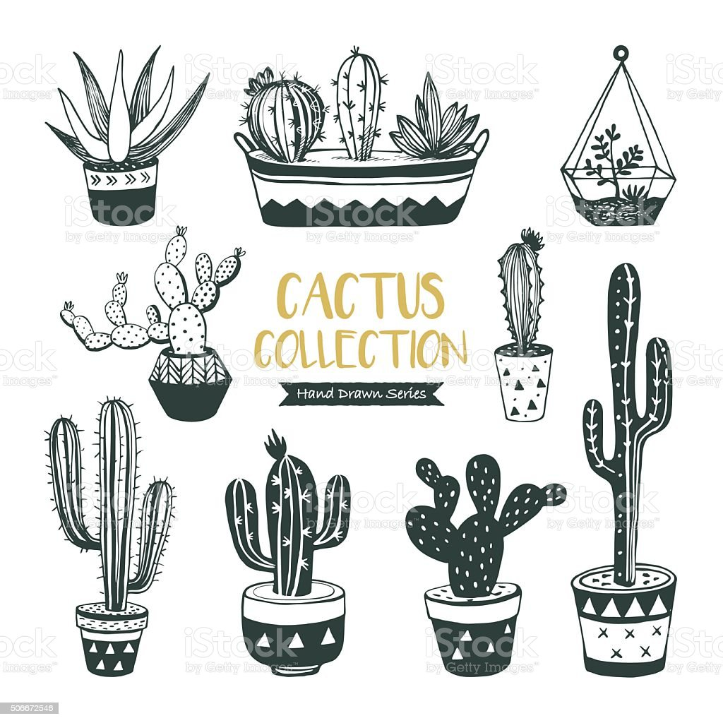 Hand drawn cacti collection vector art illustration