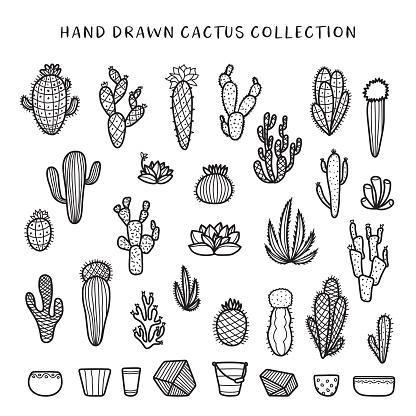 Hand drawn cactus set. Vector doodle vintage illustration.