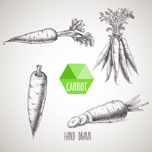 ilustrações de stock, clip art, desenhos animados e ícones de hand drawn carrot set. - cenoura