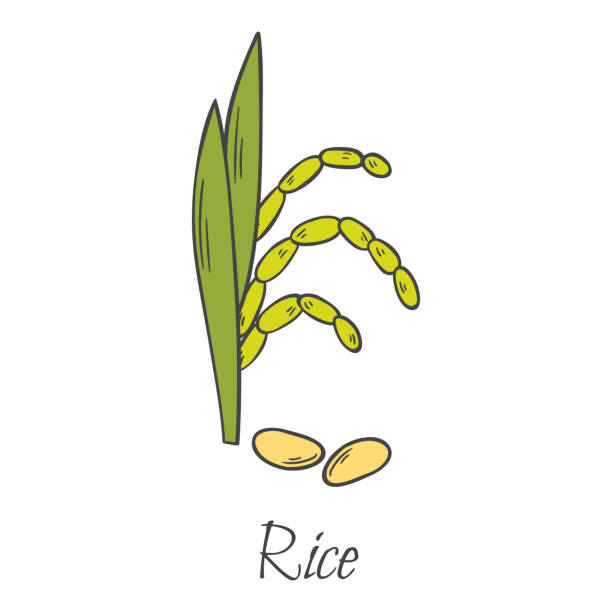 Royalty Free Rice Field Clip Art, Vector Images ...