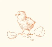 istock Hand drawn chick hatched out of an egg 165763281
