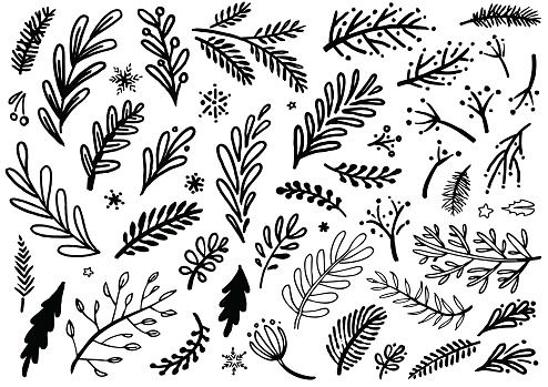 Christmas plants and floral doodle sketch vector designs for use on Christmas cards and promotional advertising.