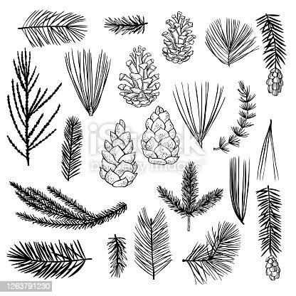 istock Hand drawn Christmas plants set. Vector sketch  illustration. 1263791230