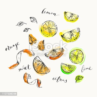 Hand drawn citrus cuts and zest top view and calligraphy elements. Ink and watercolor stain illustration of lemon, lime, orange. For food and drink background.