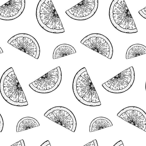 illustrations, cliparts, dessins animés et icônes de motif sans couture d'agrumes dessinés à la main. illustration de vecteur dans le modèle d'esquisse - infusion pamplemousse