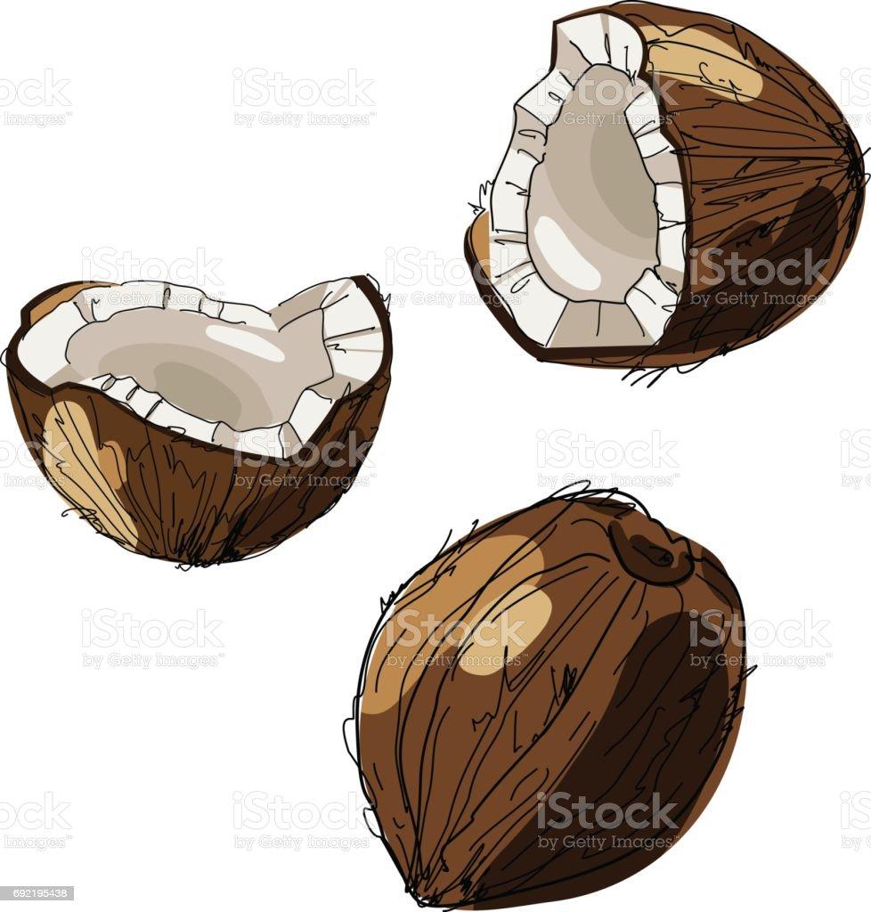Coco de dibujado a mano. Coco aislado en fondo blanco. Dibujo vector alimentos tropicales ilustración. - ilustración de arte vectorial
