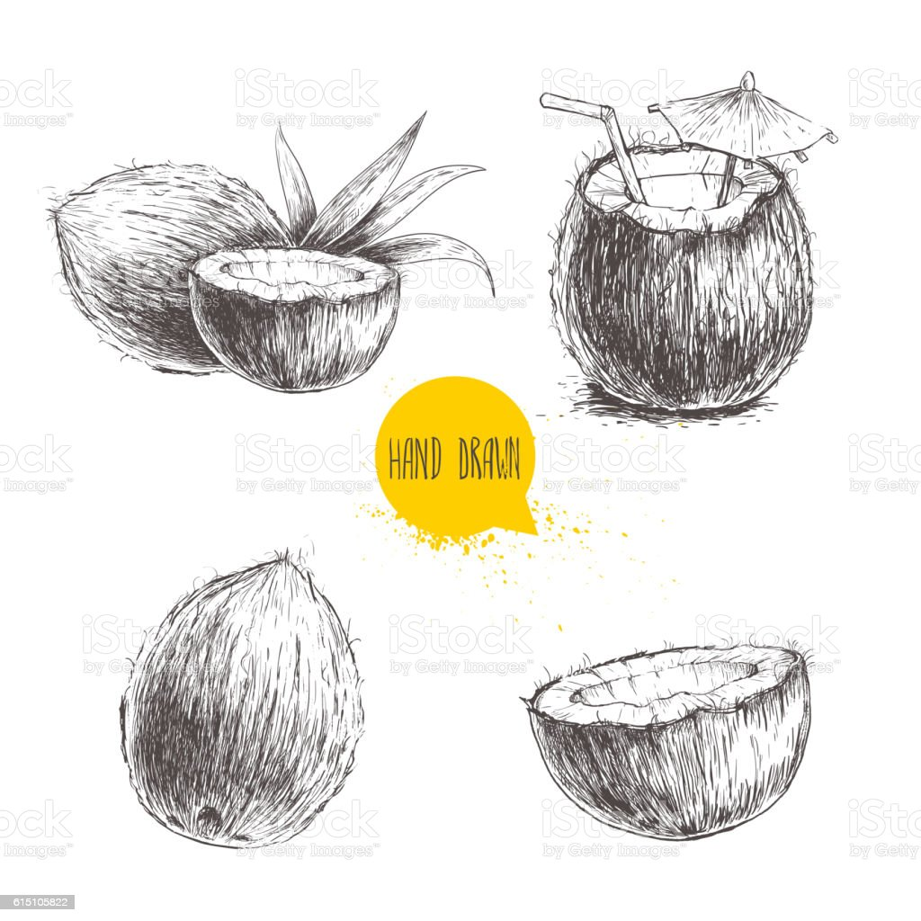 Hand drawn coconut set. Cocktail isolated on white background. vector art illustration