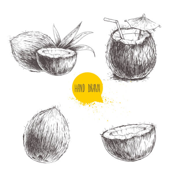 ilustrações, clipart, desenhos animados e ícones de hand drawn coconut set. cocktail isolated on white background. - coqueiro