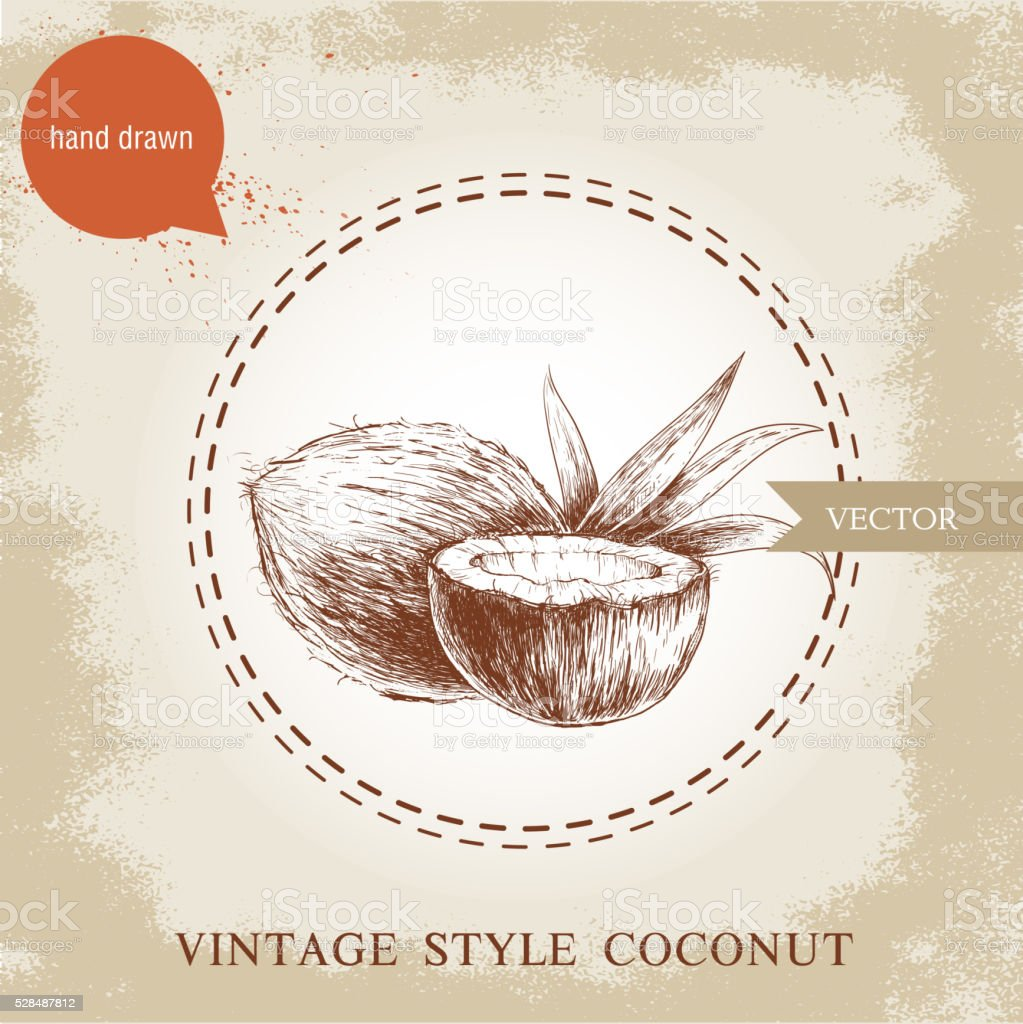 Hand drawn coconuts isolated on vintage background. vector art illustration