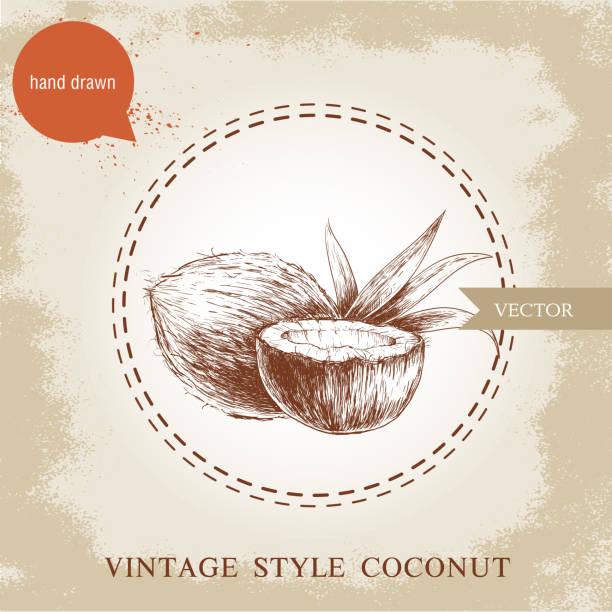 ilustrações de stock, clip art, desenhos animados e ícones de desenhado à mão cocos isolado num fundo vintage. - oleo palma
