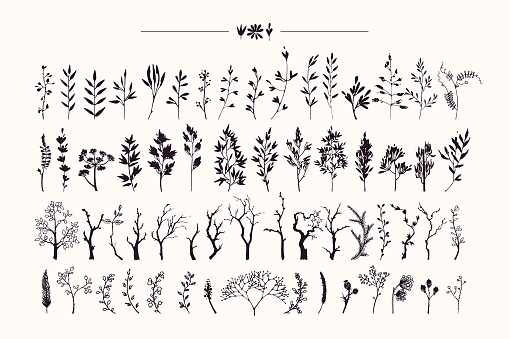 Hand drawn collection of rustic and floral design elements. Plants, flowers, leaves, tree branches silhouettes made with ink. Vector illustrations clipart isolated on white background.