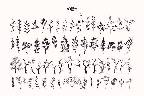 ręcznie rysowana kolekcja rustykalnych i kwiatowych elementów wzoru. rośliny, kwiaty, liście, gałęzie drzew sylwetki wykonane tuszem. ilustracje wektorowe są pojedyncze na białym tle. - gałązka stock illustrations