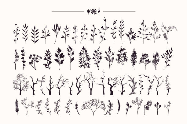 Hand drawn collection of rustic and floral design elements. Plants, flowers, leaves, tree branches silhouettes made with ink. Vector illustrations clipart isolated on white background. Tree branches and plants silhouettes made with ink. Hand drawn clipart illustration collection of rustic, floral design elements. Wood twigs, sticks, forest, flowers and leaves. Isolated vector set on white background. autumn clipart stock illustrations