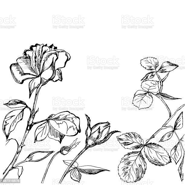 Hand drawn composition of roses buds and leafs vector id487316876?b=1&k=6&m=487316876&s=612x612&h=eozky4g chouceudivvbujqogp3rkcqdjz4x a46r3a=